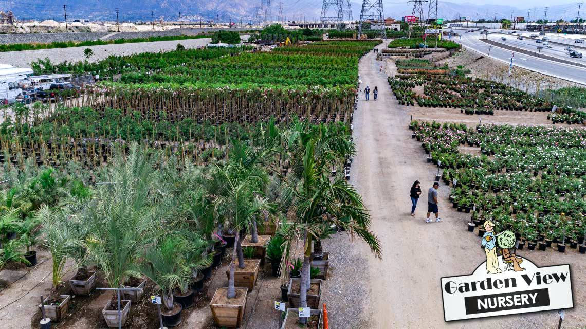 anaheim wholesale nursery hedges and trees at garden view nursery