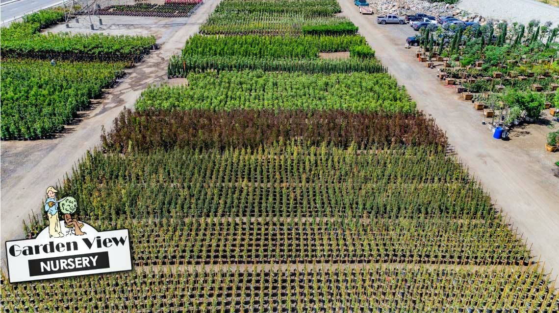 anaheim wholesale nursery rows of hedges in ca