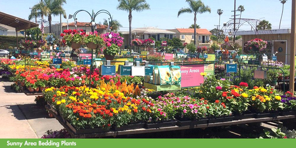anaheim wholesale nursery view all images of garden centers long beach