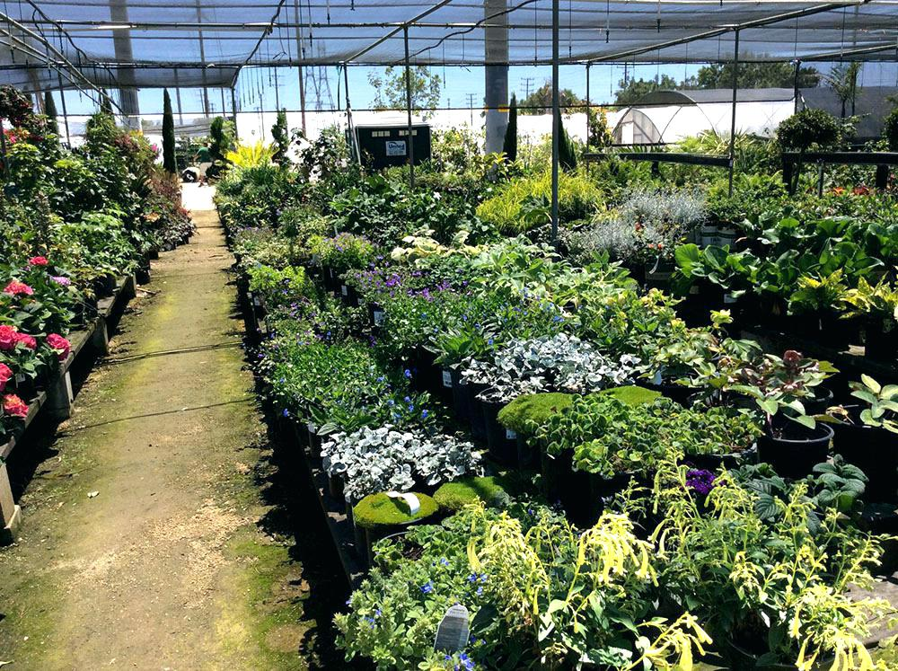 anaheim wholesale nursery wholesale nursery prev wholesale nursery website