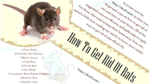 how to clean dishes after mice how to get rid of rats in your home